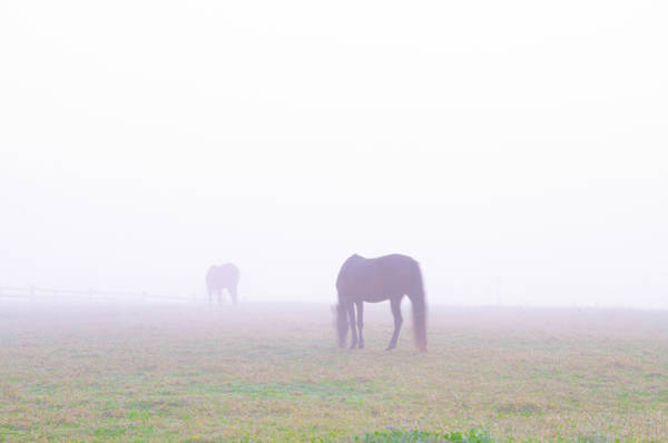 Wall Art - Photograph - Foggy Farm by Bill Cannon