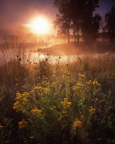 Photograph - Foggy Flowers by Ray Mathis