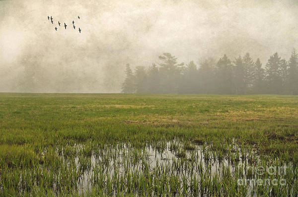 Photograph - Foggy Flying by Karin Pinkham