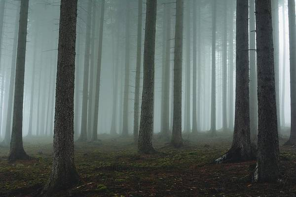 Wall Art - Photograph - Foggy Forest by David Charouz