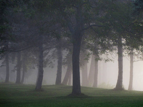 Ottawa Photograph - Foggy Forest by Francois Dion