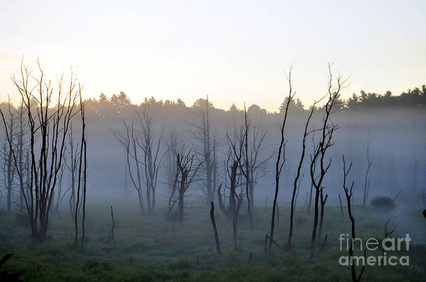 Photograph - Foggy Forest by Staci Bigelow