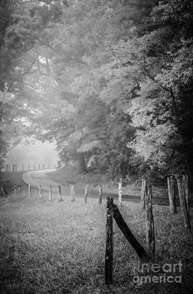 Photograph - Foggy Loop Road by David Waldrop