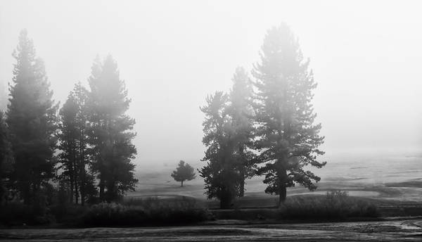 Photograph - Foggy Meadows by Mick Burkey