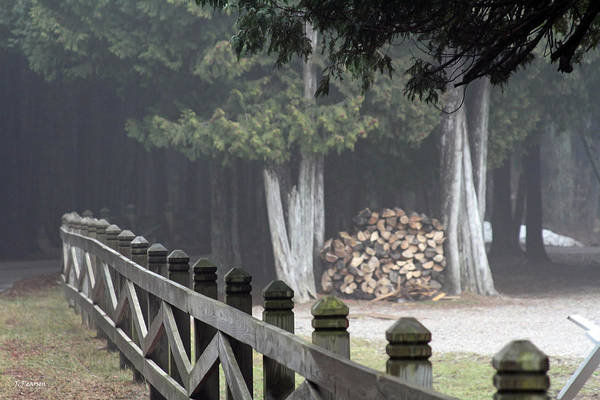 Photograph - Foggy Mist by Jackson Pearson
