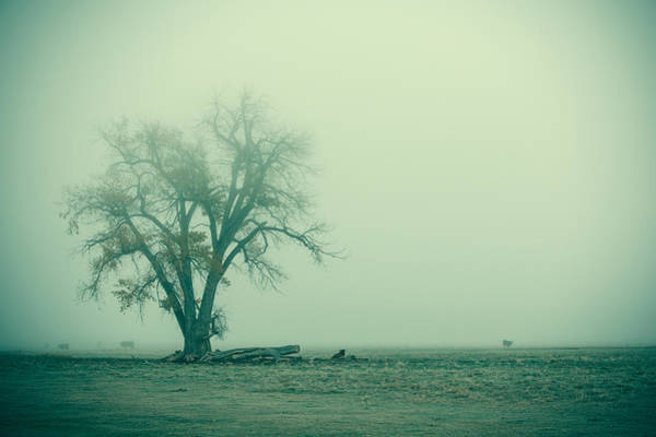 Photograph - Foggy Morn by Todd Klassy
