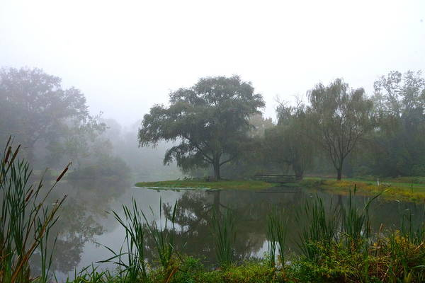 Photograph - Foggy Morning At The Willows by Byron Varvarigos