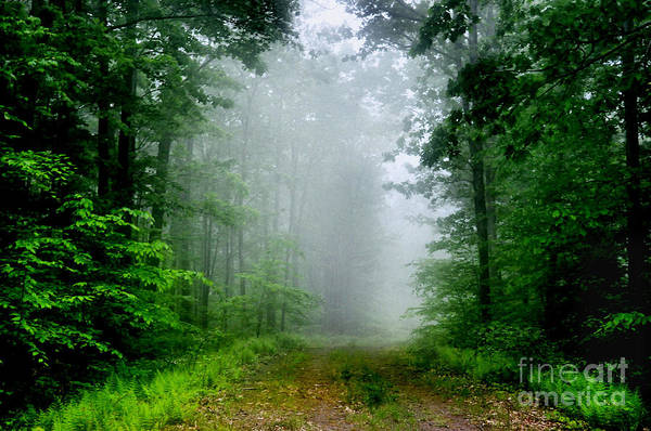 Photograph - Foggy Morning by Debra Fedchin