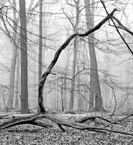 Foggy Morning Deciduous Forest Art Print