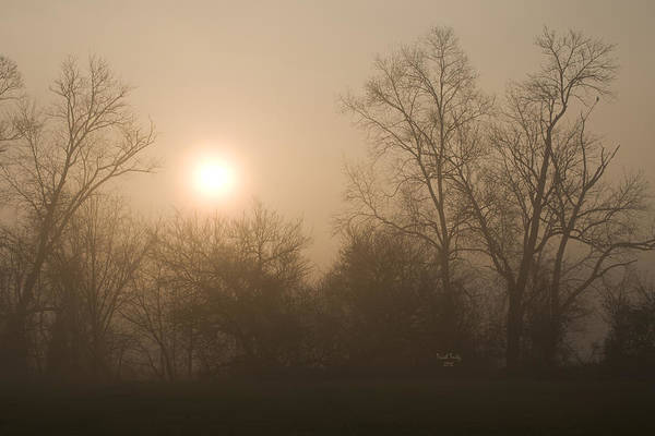 Photograph - Foggy Morning In Gilbertsville by Trish Tritz