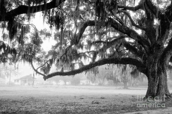 Foggy Morning On Coosaw Plantation Art Print