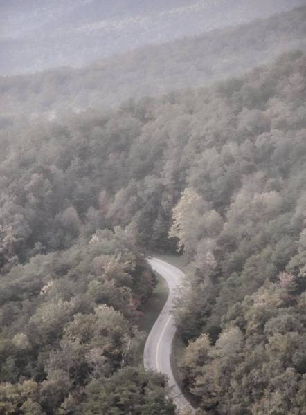 Photograph - Foggy Morning Road by Dan Sproul