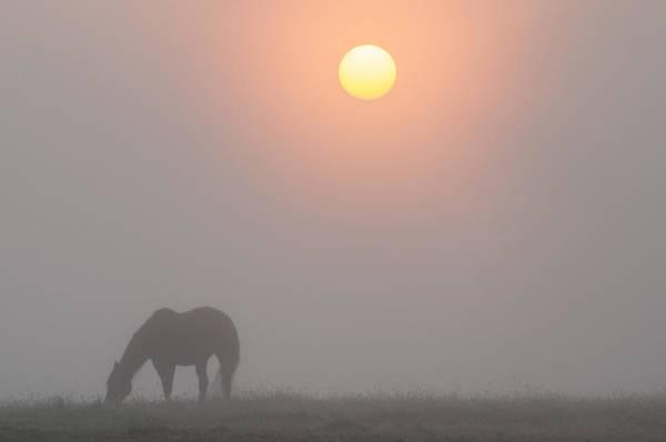Wall Art - Photograph - Foggy Morning Sunrise by Bill Cannon