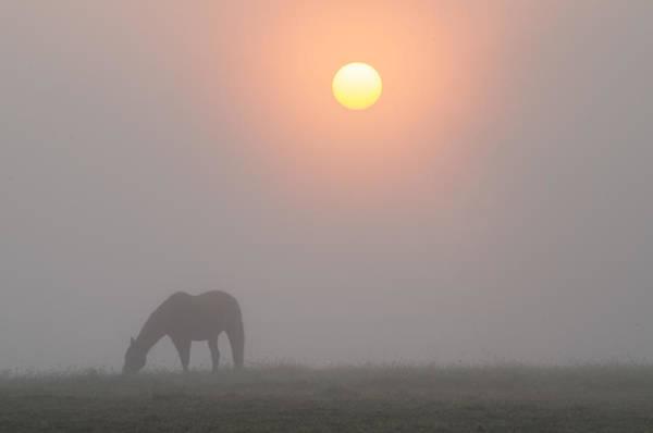 Wall Art - Photograph - Foggy Morning Sunrise On The Farm by Bill Cannon