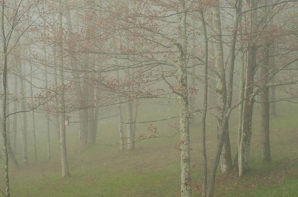 Photograph - Foggy Morning With Trees by Nancy De Flon
