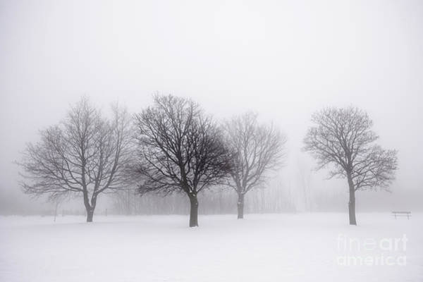 Leafless Tree Wall Art - Photograph - Foggy Park With Winter Trees by Elena Elisseeva