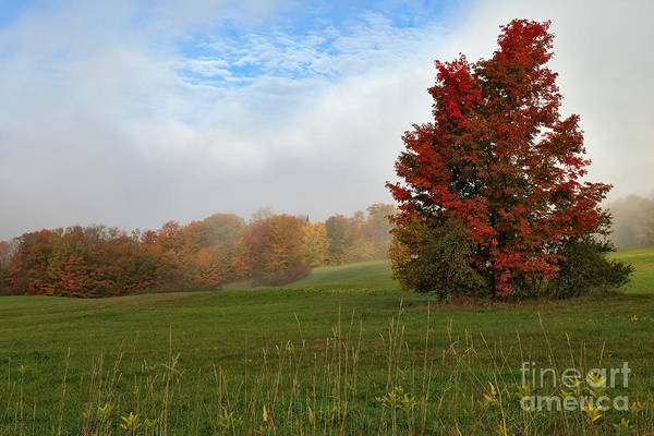 Photograph - Foggy Ridge by Charles Kozierok