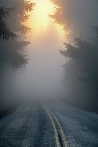 Vertical Perspective Photograph - Foggy Road With Sun Breaking Through by Bryan Mullennix