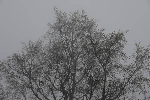Photograph - Foggy Romance 4 by Teo SITCHET-KANDA