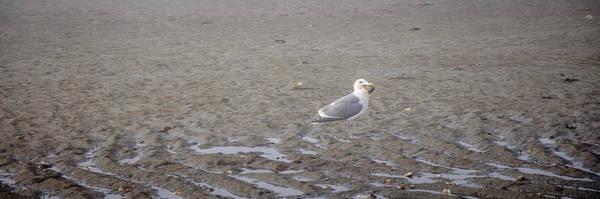 Photograph - Foggy Seabird Seagulls Brunch by Roxy Hurtubise