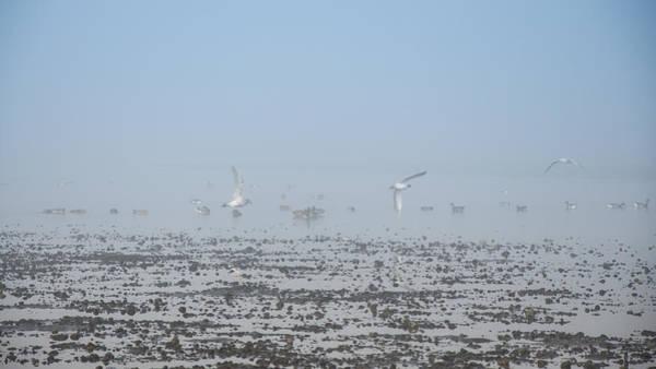 Photograph - Foggy Seabirds Parksville Beach by Roxy Hurtubise