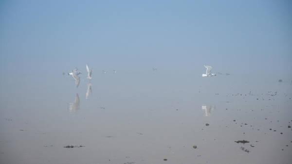 Photograph - Foggy Seabird Gathering Reflections by Roxy Hurtubise