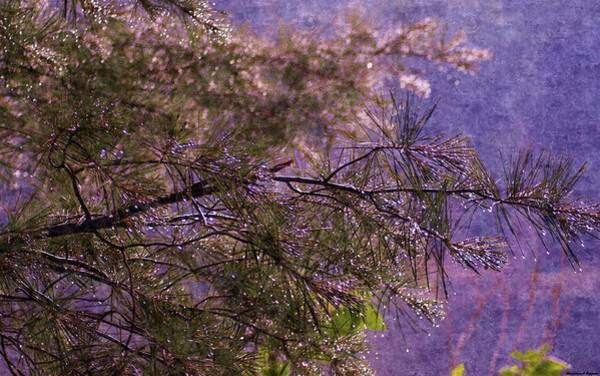 Manistee National Forest Wall Art - Painting - Foggy Spring Rain Morning by Rosemarie E Seppala