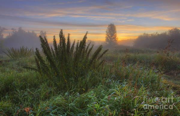 Sturgeon River Photograph - Foggy Sturgeon Morning by Dan Jurak