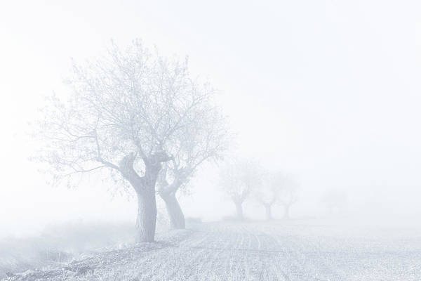 Foggy Photograph - Foggy Sunday by Eduardo Mart??n
