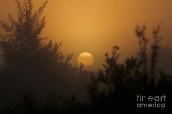 Foggy Sunrise Art Print