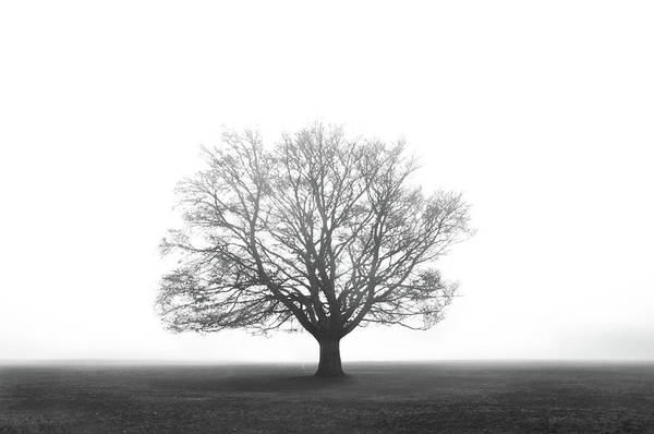 Bristol Photograph - Foggy Tree by Photography By Graham Lawson