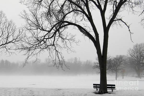 Teresa Zieba - Foggy Winter Morning