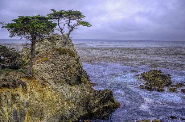 Monterey Cypress Photograph - Foglift by Stephen Campbell