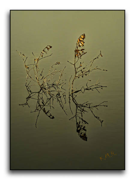 Wall Art - Photograph - Fogy Reflection by Keith Hutchings