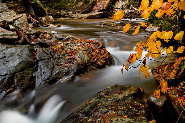 Foilage Photograph - Foilage Along The Falls by Carl Jacobs