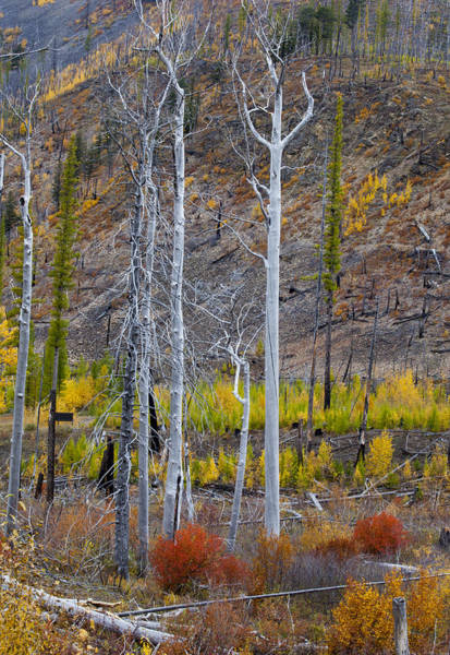 Photograph - Foilage Of Fall by Fran Riley
