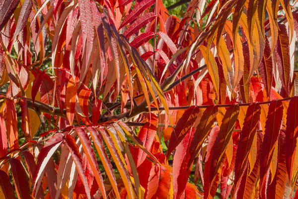 Photograph - Foliage Colors by Nick Mares
