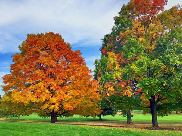 Photograph - Foliage In Connecticut by Pat Moore