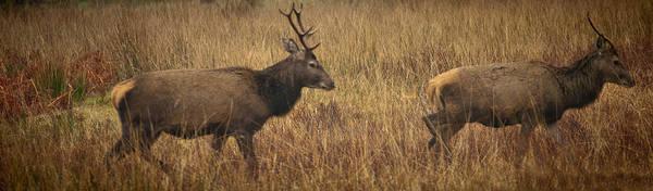 Photograph - Follow The Lead Deer by Chris Boulton