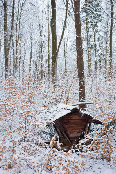 Photograph - Food Point For Animals In The Winterly Forest by Matthias Hauser