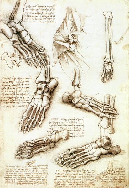 Wall Art - Photograph - Foot Anatomy By Leonardo Da Vinci by Sheila Terry