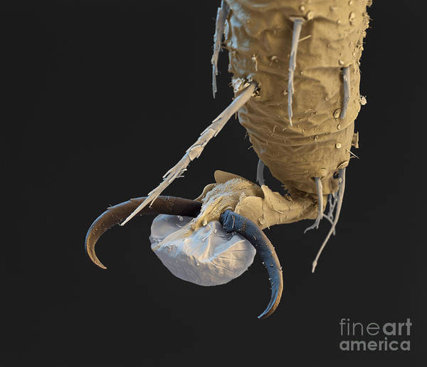 Photograph - Foot Of A Bat Tick Sem by Eye of Science