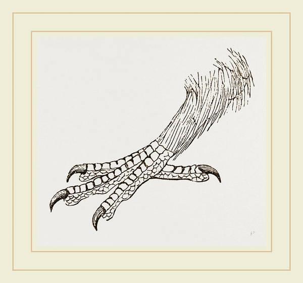Hornbill Drawing - Foot Of Rhinoceros Hornbill by Litz Collection