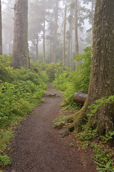 Trees In Fog Photograph - Footpath In Foggy Forest Along Oregon by Panoramic Images