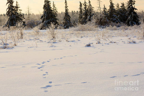 Southern Ontario Photograph - Footprints In Fresh Snow by Louise Heusinkveld