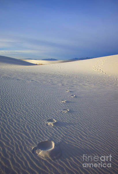 White Sand Photograph - Footprints by Mike  Dawson