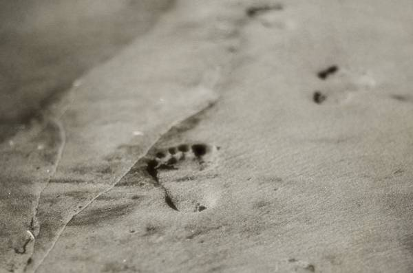 Wall Art - Photograph - Footprints On The Beach by Dan Sproul