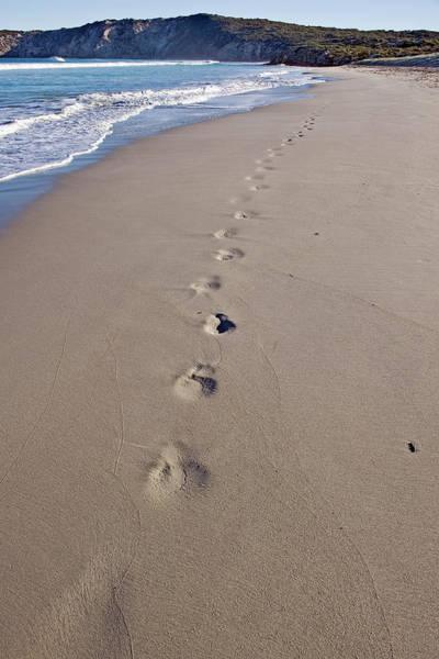 High Tide Photograph - Footprints On The Beach by Jim Julien / Design Pics