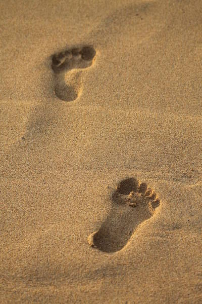 Photograph - Footprints by Pamela Walton