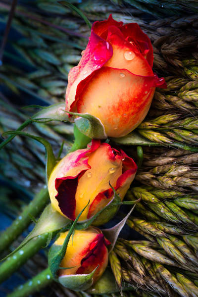 Photograph - For Summer Time 01 by Edgar Laureano